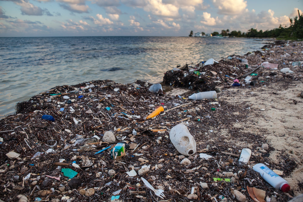 Ocean plastic could triple by 2040 and outnumber fish by 2050, study says
